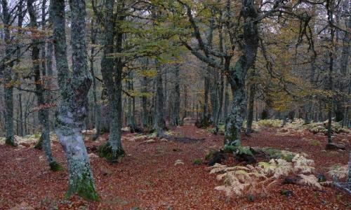 Imagen de PR-LE 29: Picos Mampodre