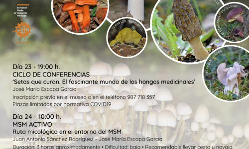 Micología en el entorno del MSM.