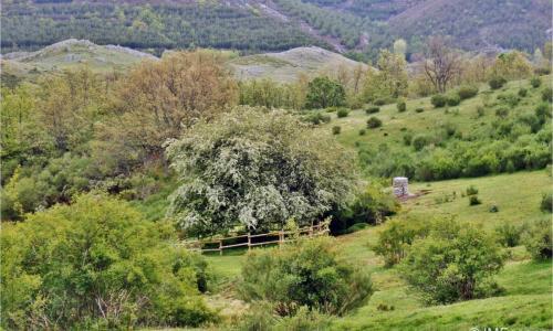 Espino de Villadefrancos