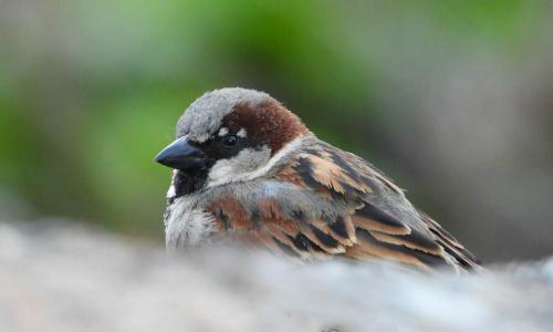 Más que pájaros: