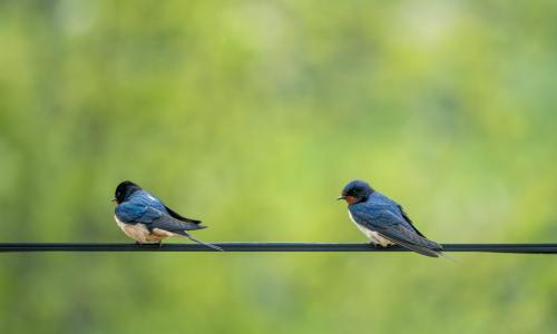 Rutas ornitológicas: