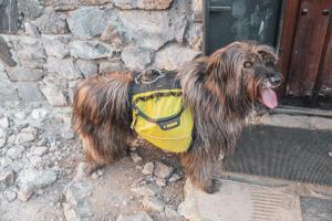 Refugio de Montaña Diego Mella / Collado Jermoso4