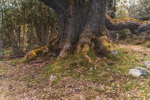 Bosque de Hormas4