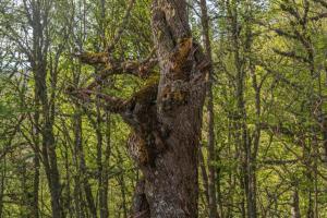 Bosque de Hormas1