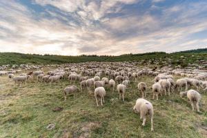 Ecomuseo de la lana merina trashumante0