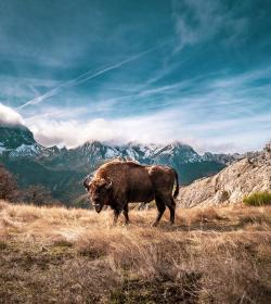 Osos, lobos y otros mamíferos