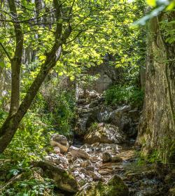 Bosques fascinantes