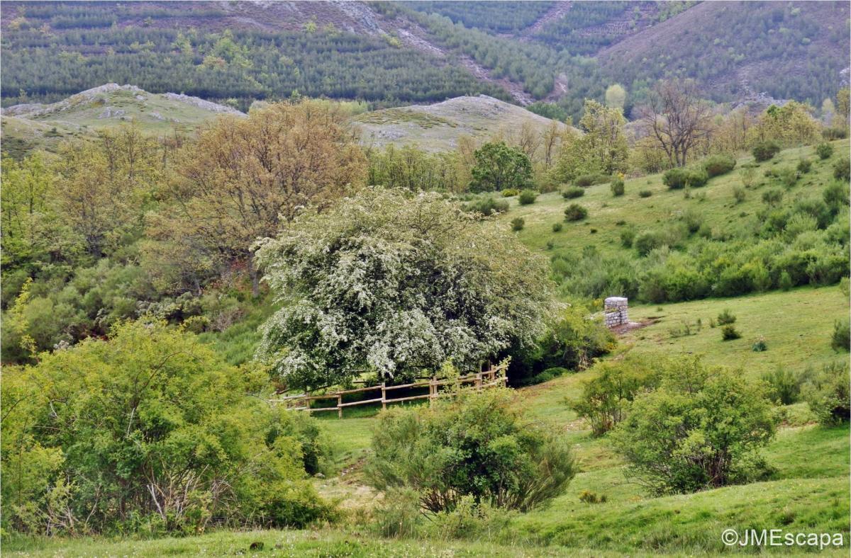 Espino de Villadefrancos0