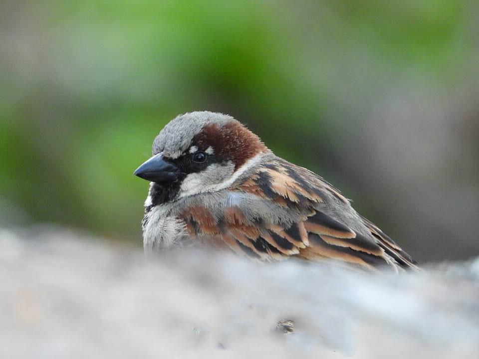 """Más que pájaros: """"Rutas ornitológicas""""0"""
