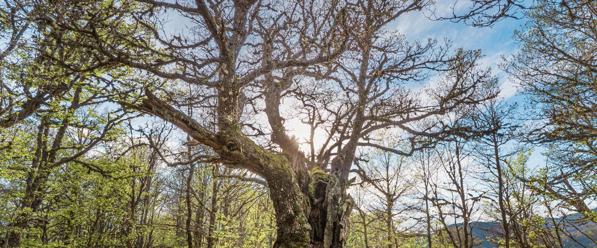 Bosque de Hormas